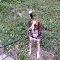 Adopt A Pet :: Kuromi - Beacon, NY