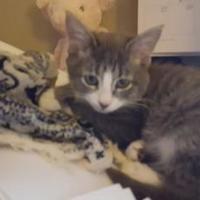 Adopt A Pet :: Granite - Denver, CO