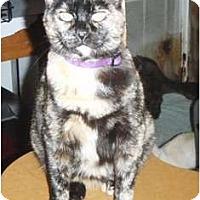 Adopt A Pet :: Giselle - Pasadena, CA