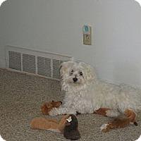 Adopt A Pet :: Snoopy - Alliance, NE