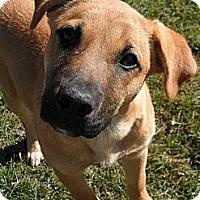 Adopt A Pet :: Pyle #5233 - Jerome, ID