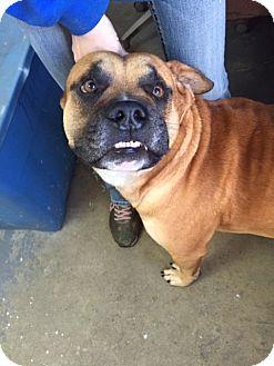 Boxer Mix Dog for adoption in Hazlehurst, Georgia - Deebo