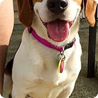 Adopt A Pet :: Oscar aka Tucker - Indianapolis, IN