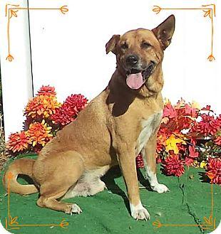 German Shepherd Dog Mix Dog for adoption in Marietta, Georgia - CHANCE (R)