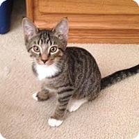 Adopt A Pet :: Loki - Alamo, CA