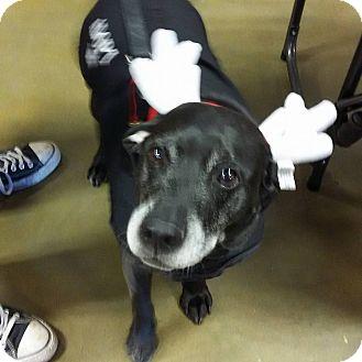 Labrador Retriever Mix Dog for adoption in Shallotte, North Carolina - Wrangler