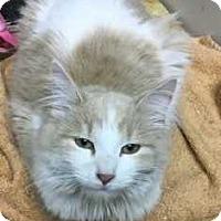 Adopt A Pet :: Sandy - Norwich, NY