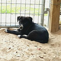 Adopt A Pet :: Price - San Antonio, TX