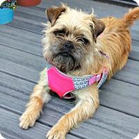 Adopt A Pet :: Gracie - Redondo Beach, CA