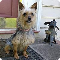 Adopt A Pet :: Trixie - Allen town, PA