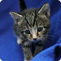 Adopt A Pet :: Belle - Mebane, NC