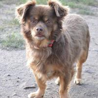 Adopt A Pet :: Pocket - Cheyenne, WY