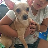 Adopt A Pet :: Mouser - Mesa, AZ