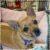 Adopt A Pet :: Chica - Las Vegas, NV