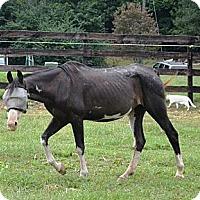 Adopt A Pet :: Cleo - Waleska, GA
