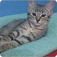 Adopt A Pet :: Layla - Jacksonville, FL
