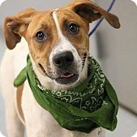Adopt A Pet :: Razzle - Lebanon, CT