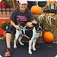 Adopt A Pet :: Jones - Crocker, MO