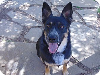 German Shepherd Dog Mix Dog for adoption in Greeneville, Tennessee - Ava