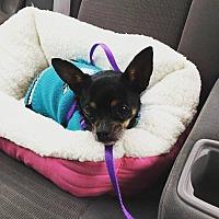 Adopt A Pet :: Ernie - Dallas, TX