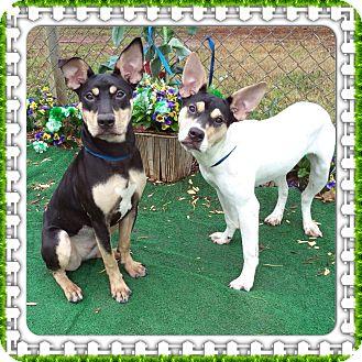 Terrier (Unknown Type, Medium) Mix Dog for adoption in Marietta, Georgia - CABERNET & MERLOT (R)