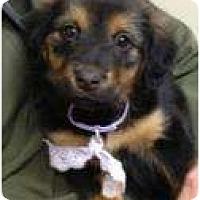 Adopt A Pet :: Chloe' - Palmyra, WI