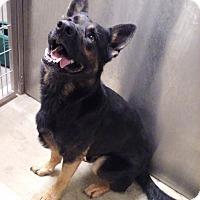 Adopt A Pet :: Caleb - Hamilton, MT