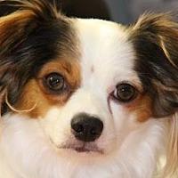 Adopt A Pet :: Conner - Colorado Springs, CO