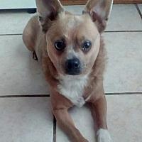 Adopt A Pet :: MJ (LM) - Tampa, FL