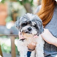 Adopt A Pet :: Patty Cakes - Los Angeles, CA