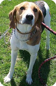 Treeing Walker Coonhound/Hound (Unknown Type) Mix Dog for adoption in Ontario, Ontario - Howie Flanders HELP