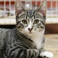Adopt A Pet :: Finley - Vinton, IA