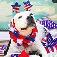 Adopt A Pet :: Carly - Charlotte, NC