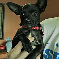 Adopt A Pet :: Cole - Savannah, GA