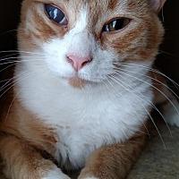 Adopt A Pet :: Jet - Winston-Salem, NC