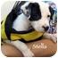 Photo 2 - Dalmatian Puppy for adoption in Mandeville Canyon, California - Stella