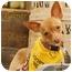 Photo 3 - Chihuahua Mix Dog for adoption in San Diego, California - Palmer