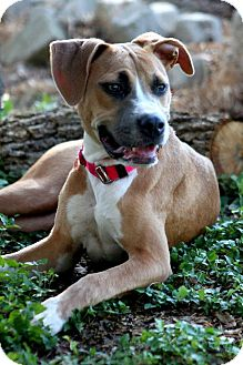 Terrier (Unknown Type, Medium)/Beagle Mix Dog for adoption in Fair Oaks Ranch, Texas - Cleopatra