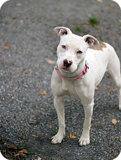 Terrier (Unknown Type, Medium) Mix Dog for adoption in Tinton Falls, New Jersey - Lexi