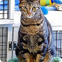 Adopt A Pet :: Senor Pepe - Victor, NY