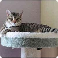 Adopt A Pet :: Cooper - Austin, TX