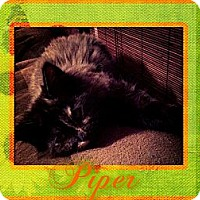 Adopt A Pet :: Piper - Washington, DC
