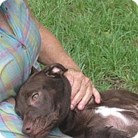 Adopt A Pet :: Belle Star - Wilmington, DE