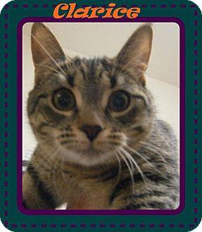 Domestic Shorthair Cat for adoption in Ortonville, Michigan - Clarice