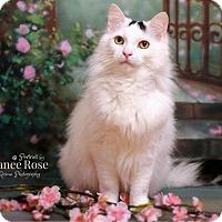 Adopt A Pet :: Mopar - Sterling Heights, MI