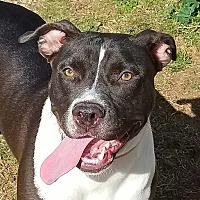 Adopt A Pet :: Liberty - Bakersfield, CA