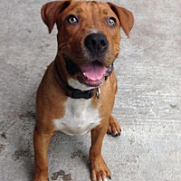 Adopt A Pet :: TJ - Groveland, FL