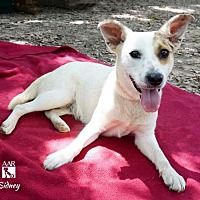 Adopt A Pet :: SIDNEY - Tomball, TX