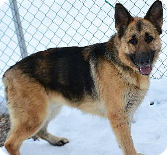 German Shepherd Dog Mix Dog for adoption in Fruit Heights, Utah - Sora