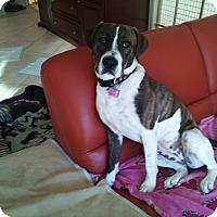 Adopt A Pet :: Maggie - East Rockaway, NY